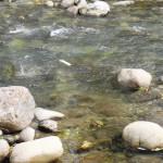 Velocità della corrente. fiume Mella